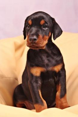 dog-1045298_1280