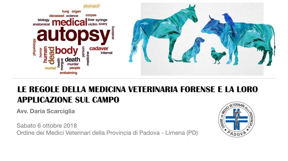 MVF Padova.001